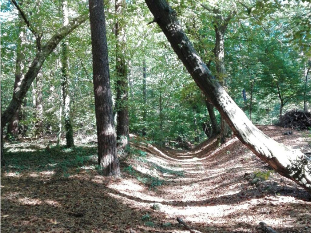 bosco di veniano